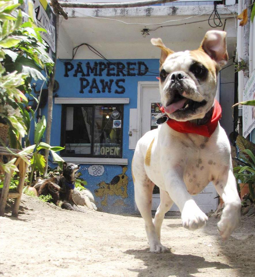 Biggy at Doggie Day Care