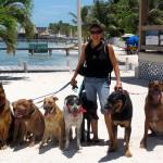Dog Power Walks