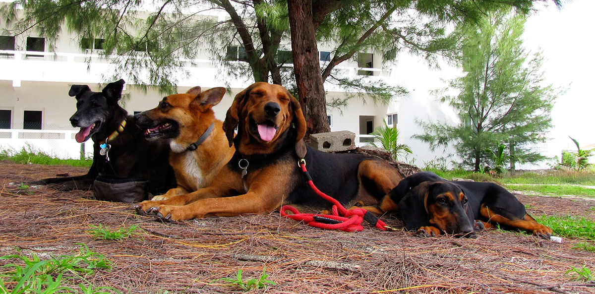 Dogs Relaxing Under Tree