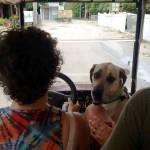 Golf Cart Lesson