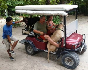 Golf Cart Riding Lesson