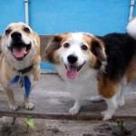 Happy Groomed Dogs