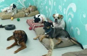 Dogs Taking a Break